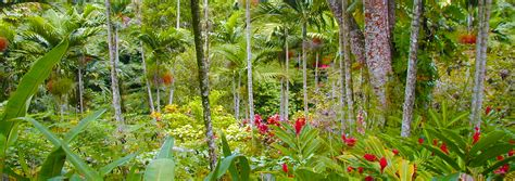 Shaw Botanical Gardens Ocho Rios Attractions Tours In Ocho Rios