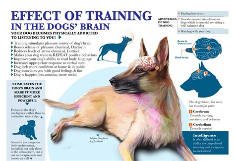 brain for dogs effects of on your s brain ask dr caryn