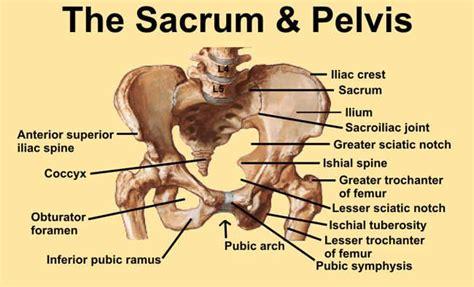 pelvic diagram image 1 diagram of pelvis and sacrum with bony landmarks