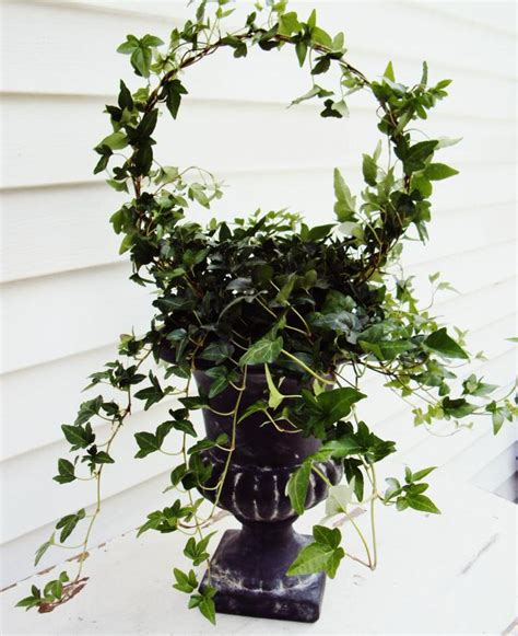 topiary diy make a topiary from a wire coat hanger tip junkie
