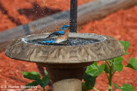 mosquito proof backyard julie craves explains how to mosquito proof your birdbath