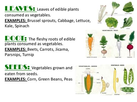 exles of root vegetables fn1 ppt fruits and vegetables