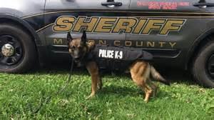 Macon County Sheriff S Office by Macon County Sheriff S Office K9 Gets New Ballistic Vest