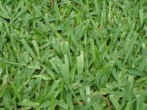 types of grass
