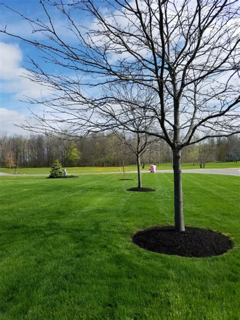 landscaping rochester ny rochester residential lawn care landscaping landscape