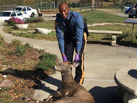 rescues deer nj state officer rescues deer drowning in pool
