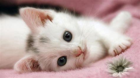 wallpaper cute cat baby cute cat wallpaper hd