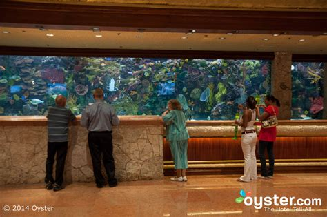 Fish Tank Reception Desk 7 Hotels With Awe Inspiring Aquariums Oyster