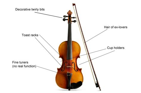 labelled diagram of a violin musical instrument diagrams get to your