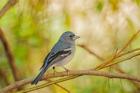 bird s 2016 red list great news for island endemics disaster