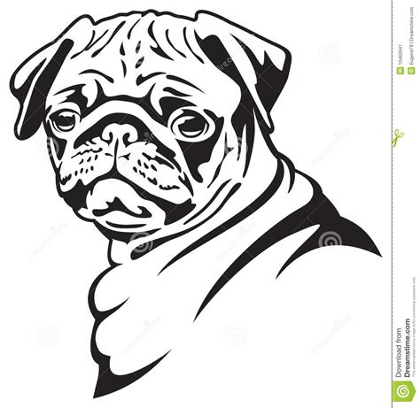pug black and white drawing pug from 50 million high quality stock photos images vectors