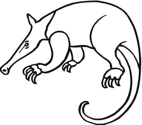 anteater 16 coloring page supercoloring com