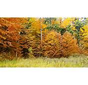 Peisaje Natura Poze Desktop Imagini Superbe De Munte Culorile