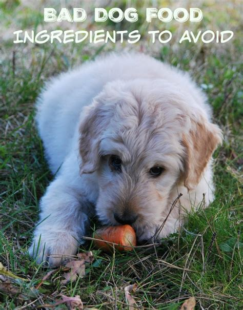 is cat food bad for dogs bad food ingredients choices