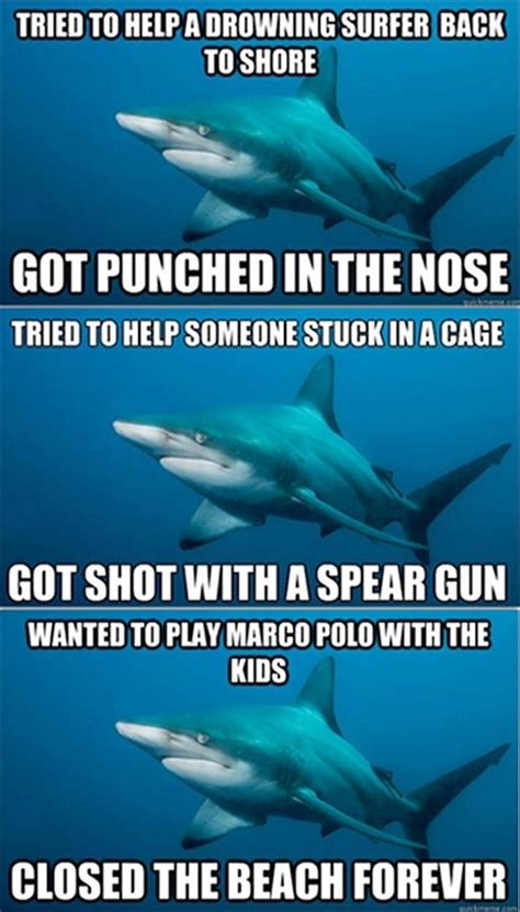 Sad Shark Meme - sharks quotes quotesgram