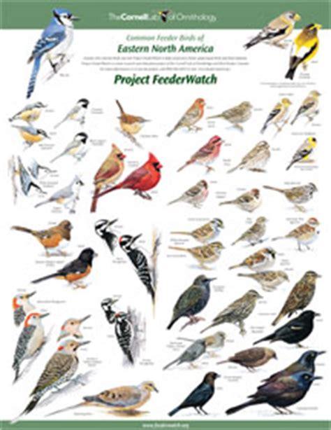 identifying birds feederwatch