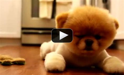 puppy falling asleep rescue puppy is introduced to a new friend what happens next is just adorable