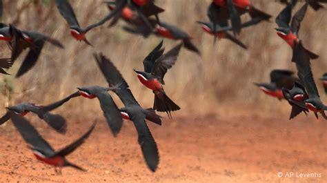 Ls Carnivored Tour gabon bird tour with birding africa forest