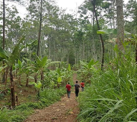 Bibit Lele Di Pare Kediri 16 ribu bambu untuk konservasi mata air kediripedia