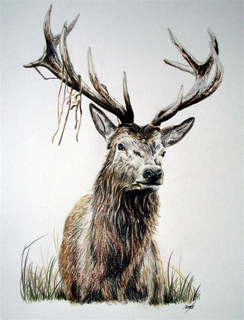 Home Decor Owls red deer stag isle of mull scotland drawing by aaron de