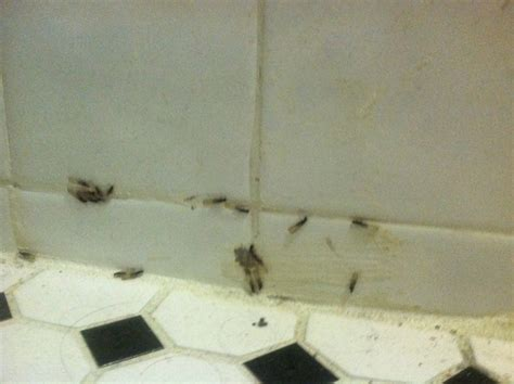 little flying bugs in my bathroom ants with wings in bathroom homedecoratorspace com