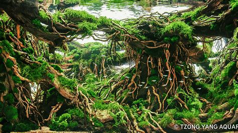 aquascaping contest 20 sequa