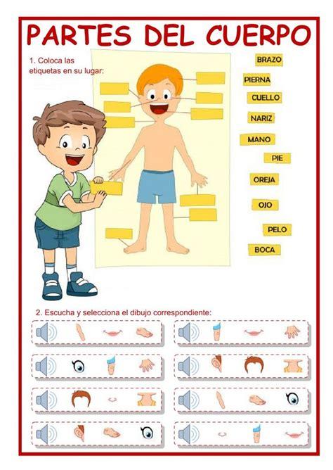 imagenes y nombres de las partes del cuerpo 17 best images about cuerpo humano on brad pitt spanish and language