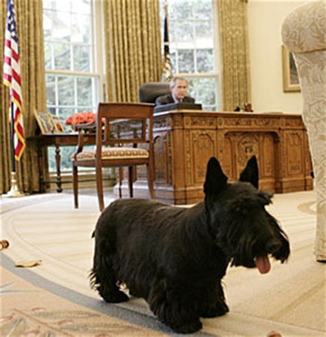 white house dogs names white house pets