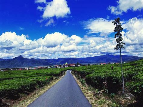 Teh Kayu Aro perkebunan teh kayu aro keindahan kebun teh dengan background gunung kerinci tempat co id