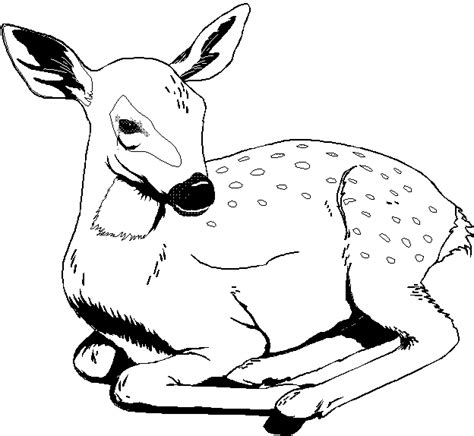 free coloring pages of wild animals printable 35 wild animal coloring pages 3598 coloring