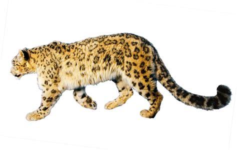 jaguar png