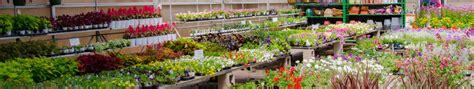 Lowes Garden Center Sales by Garden Center Sales 28 Images Garden Center Plants For