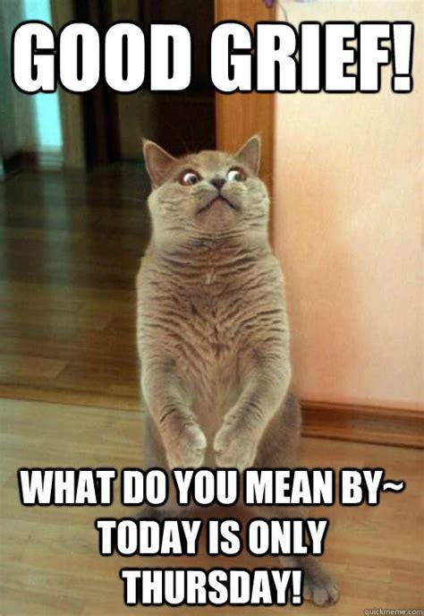 Good Morning Cat Meme - www hdwallpapersonly com wp content uploads 2013 06 grumpy