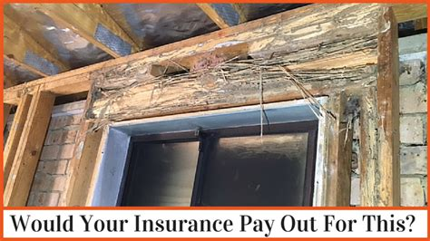 does house insurance cover water damage house insurance damage does your insurance cover termite damage dentec pest management