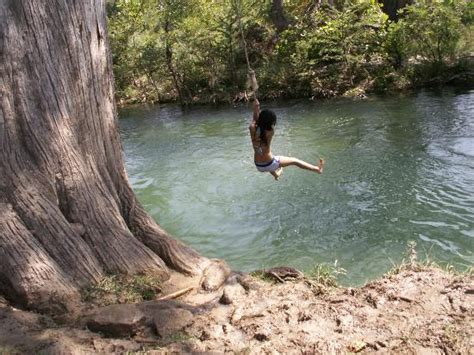 rope swinging the story of a tree rhetoric