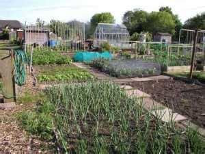 fruit vegetable growing guide   allotment gardens