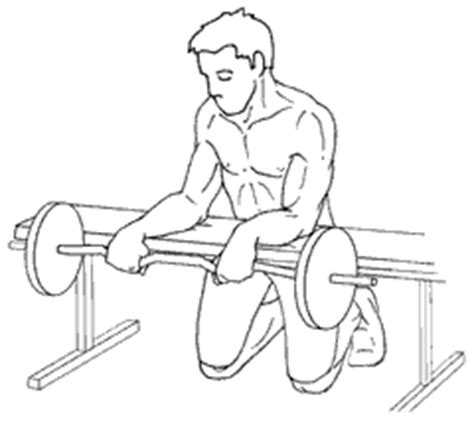 reverse barbell wrist curl over bench reverse barbell wrist curl over bench www pixshark com