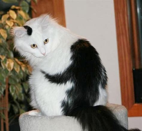 funny animal 09 07 11 top 25 animals with unbelievable fur markings 16 beware