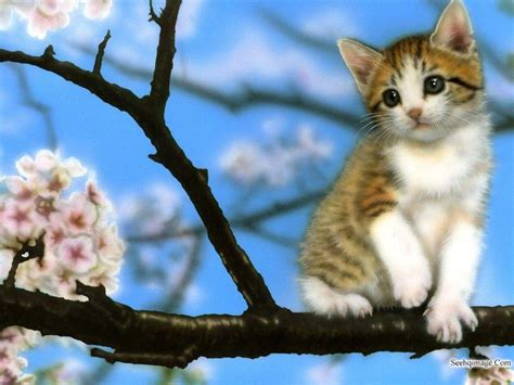 kitten background baby kitten wallpapers wallpaper cave