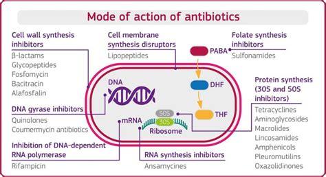 mode  action  antibiotics antibiotics  inhibit