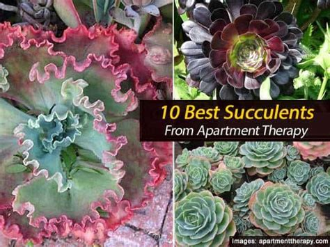 How To Propagate Cacti Succulents Apartment Therapy - 10 best succulents from apartment therapy 30 gardens and