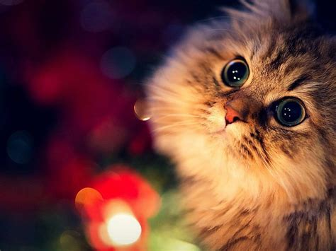 imagenes wallpapers gatos gatos fondo de pantalla hd