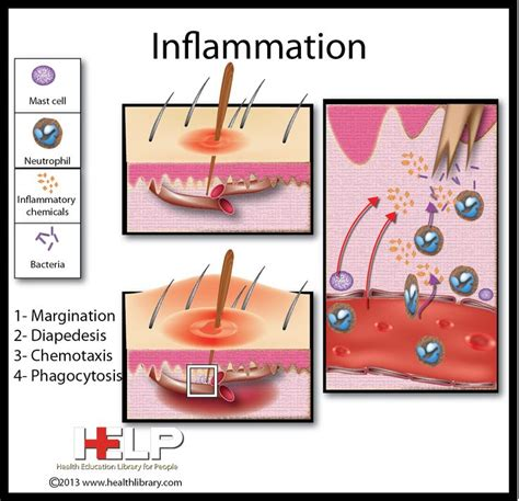 best medicine for inflammation 25 best homeostasis images on pinterest physiology
