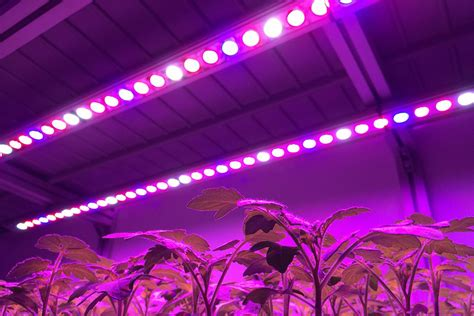 greenhouse led grow lights led greenhouse lighting lighting ideas