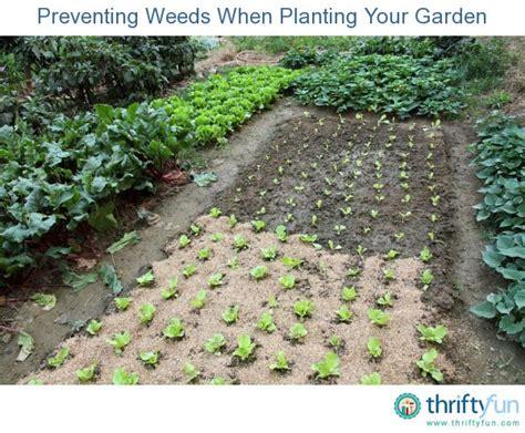 preventing weeds when planting your garden thriftyfun