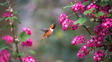 pics of spring this spring help birds by growing native plants audubon