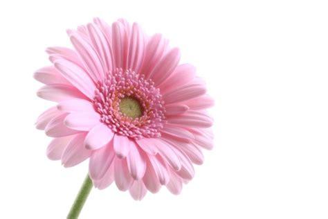 imagenes jpg de flores la flor generadordeideas com