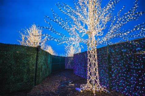 enchant christmas light maze better dating ideas vancouver december 8th 11th