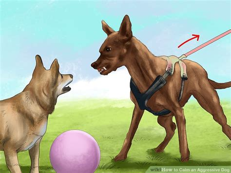 how to calm an aggressive 3 ways to calm an aggressive wikihow