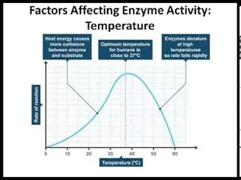 design experiment enzyme activity enzyme lab effect of temp and ph youtube